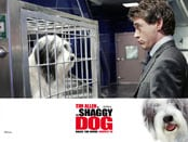 Shaggy Dog, The Wallpapers